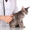 Ветеринарные клиники в Юрюзани
